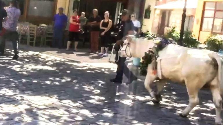 Μυτιλήνη: Αντιδράσεις για την περιφορά και δημόσια σφαγή ταύρου για να τηρηθεί το... έθιμο