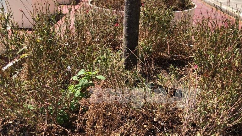 Ξεράθηκαν τα φυτά στις ζαρντινιέρες του «Μεγάλου Περιπάτου»