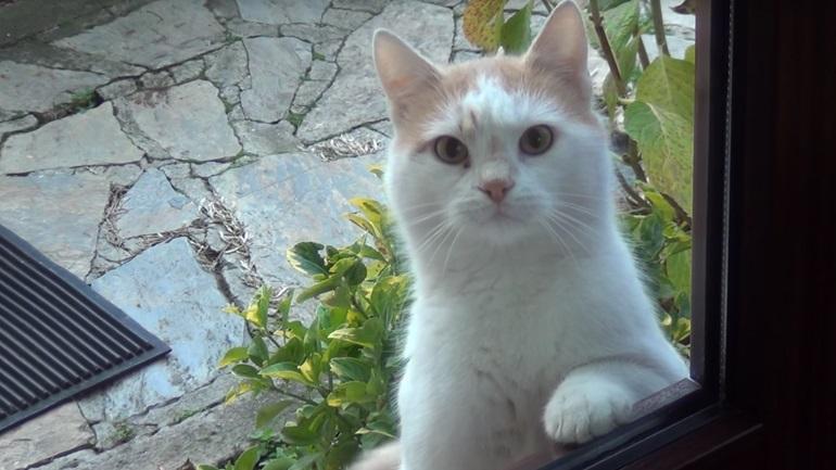 Μία πολύ επίμονη γάτα