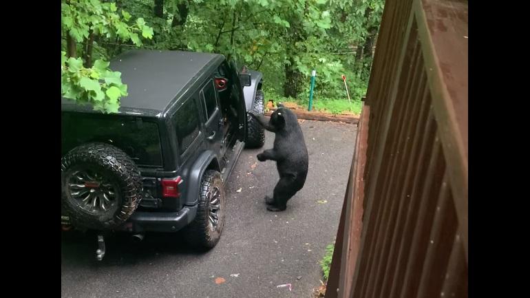 Η αρκούδα ήθελε να μπει στο αυτοκίνητο
