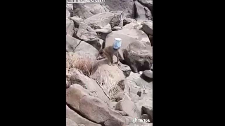 Αυτή η μαϊμού έχει σοβαρό πρόβλημα