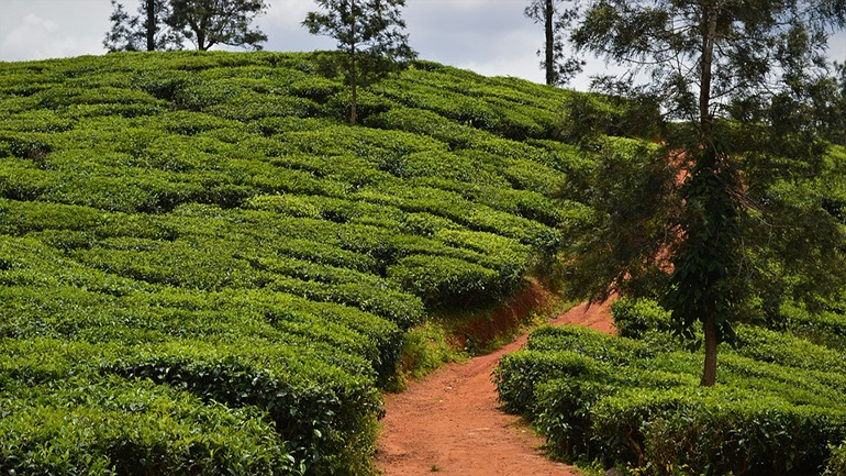 Ινδία: Τουλάχιστον 43 νεκροί από κατολίσθηση που έπληξε φυτεία τσαγιού