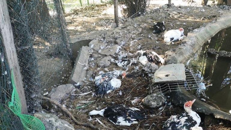 Κτηνωδία: Σκότωσαν 20 πάπιες στο Δημοτικό Πάρκο Νάουσας