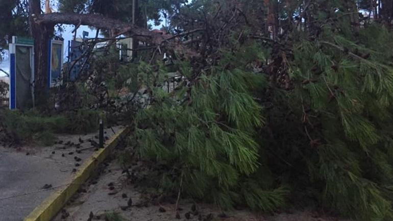 Ξερίζωσε δέντρα και έστειλε χείμαρρους με λάσπες ο «Ιανός» στην Κεφαλονιά