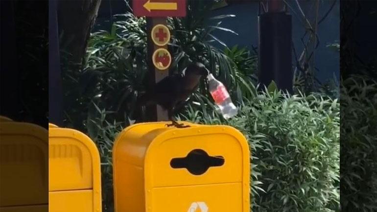 Μέχρι και τα πουλιά ανακυκλώνουν