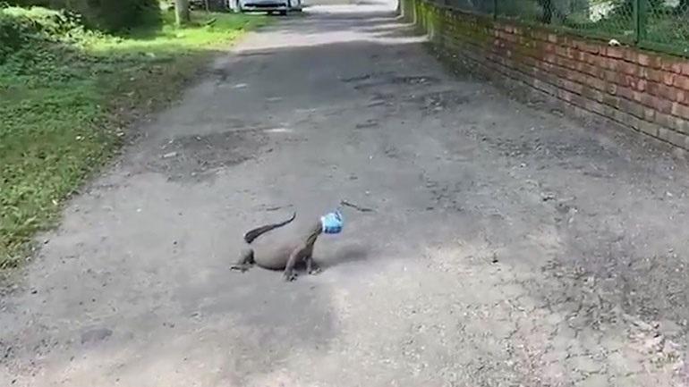 Άνδρες αφαιρούν πλαστικό δοχείο που έχει κολλήσει στο κεφάλι μιας σαύρας