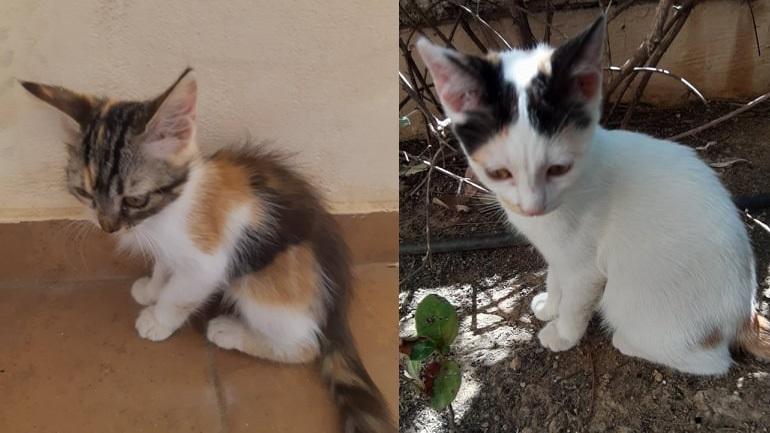 Δύο μικρά γατάκια ψάχνουν το σπίτι τους