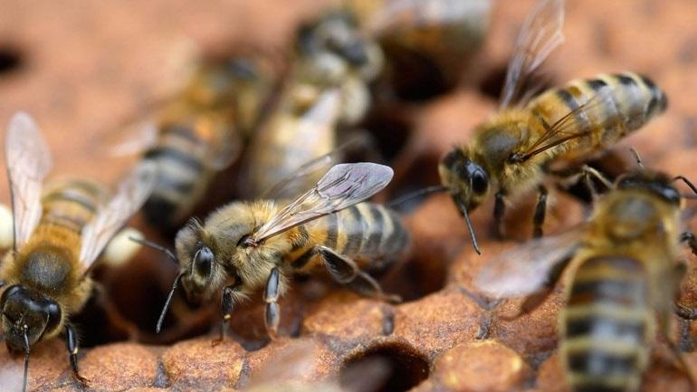 Ο κορωνοϊος δημιούργησε τραγική οικονομική κατάσταση στους μελισσοκόμους της Κρήτης