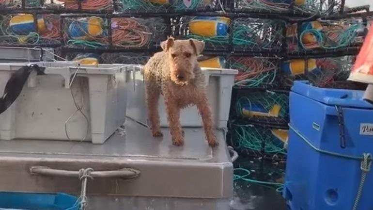 Σκύλος θαλασσόλυκος