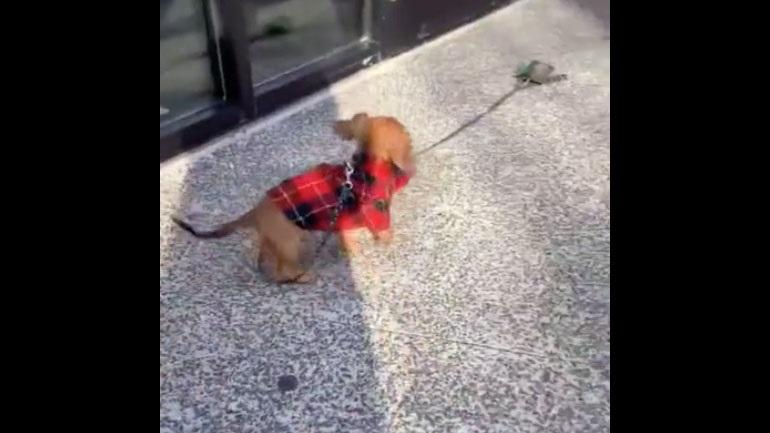 Ένα πολύ ενθουσιασμένο κουτάβι