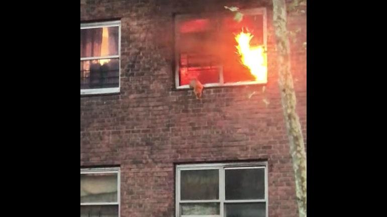 Γάτα πηδά από φλεγόμενο κτήριο