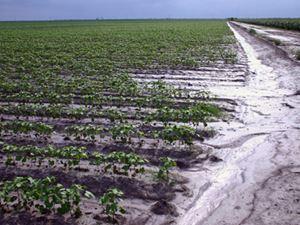 Τα άλατα απειλή για τις διατροφικές ανάγκες του πλανήτη