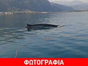Φάλαινα 12 μέτρων έκανε βόλτες στα Καμένα Βούρλα