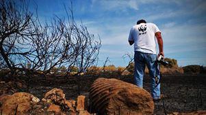 WWF Ελλάς: Σοβαρή ανησυχία για την ετοιμότητα του κράτους απέναντι στους κινδύνους πυρκαγιών