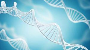 Ανακαλύφθηκαν 40 νέα γονίδια που σχετίζονται με την ανθρώπινη νοημοσύνη