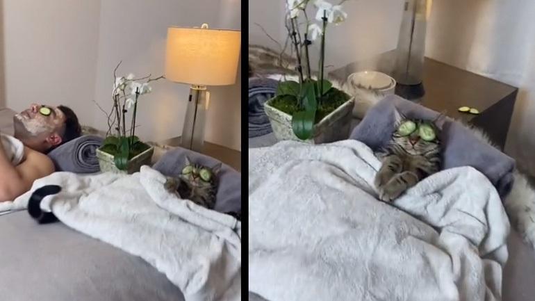 Η γάτα κάνει beaute με τον ιδιοκτήτη της