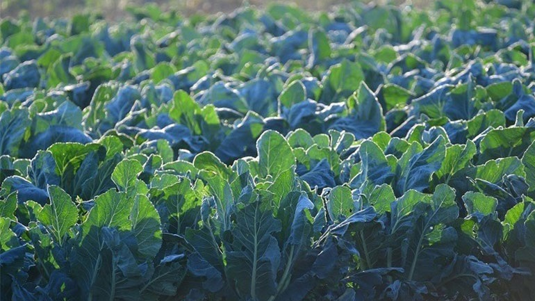 Πτολεμαΐδα: Αγρότης χρηματοδοτεί έρευνα για το περιβαλλοντικό αποτύπωμα