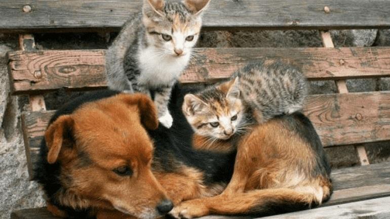 Ισπανία: Προς συνεπιμέλεια των ζώων σε περίπτωση διαζυγίου