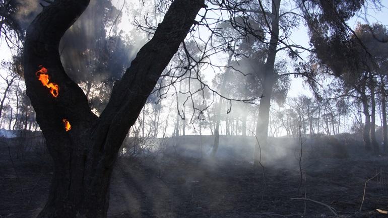 Μάχη με τις φλόγες σε διάφορα μέτωπα