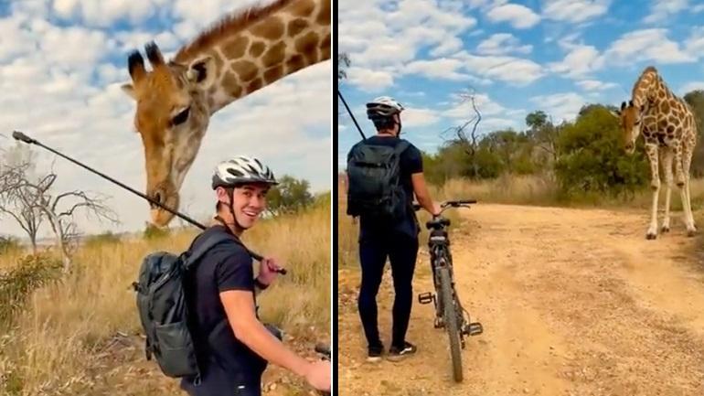 Kαμηλοπάρδαλη συναντά ποδηλάτες στην Αφρική