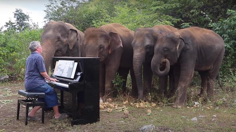 Άνδρας παίζει Μπετόβεν σε ελέφαντες