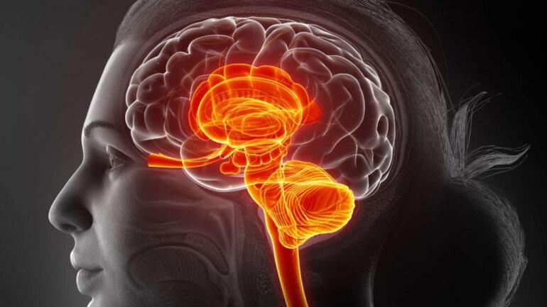 Eγκέφαλος και στομάχι: Τα νευρικά κύτταρα ορίζουν το πόσο τρώμε