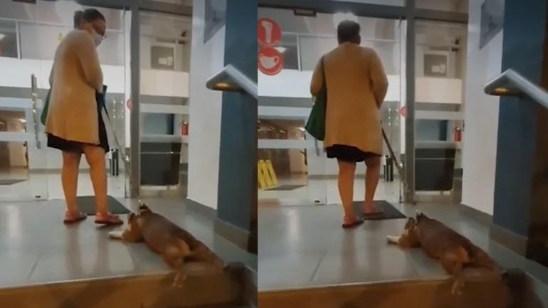 Ο σκύλος αρνείται να μπει στο σπίτι μετά τη βόλτα