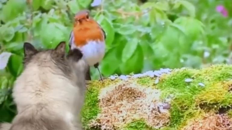 Η γάτα παρακολουθεί ντοκιμαντέρ