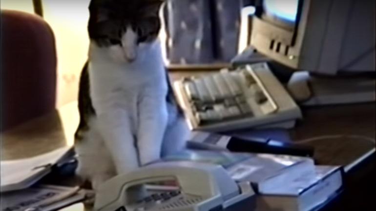Γάτα απαντά στο τηλέφωνο