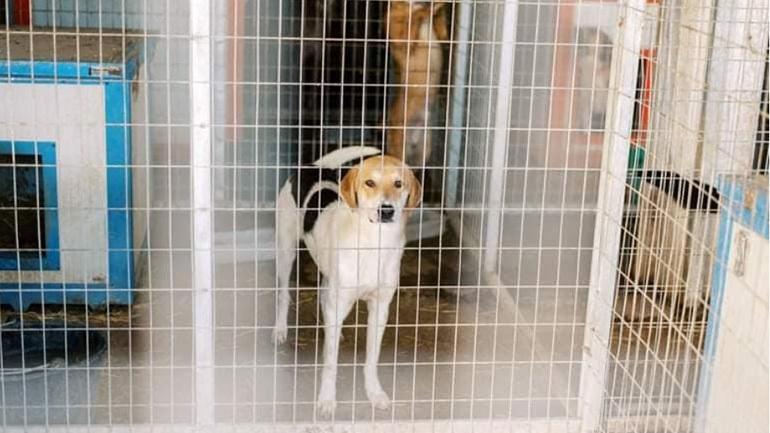 Κολαστήριο για τα σκυλιά λόγω καύσωνα το παράνομο Δημοτικό Κυνοκομείο Άρτας