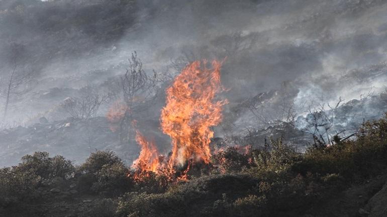 Σε πύρινο κλοιό Φθιώτιδα και Μεσσηνία – Καίγεται καταφύγιο ζώων (ΦΩΤΟ)
