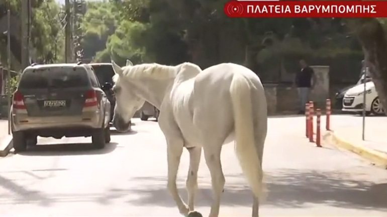 «Θύματα» της πυρκαγιάς τα άλογα των ιππικών ομίλων της Βαρυμπόμπης