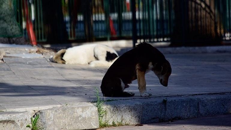 Dogs' Voice: Φιλοξενία και παροχή βοήθειας σε ζώα από τις πυρόπληκτες περιοχές