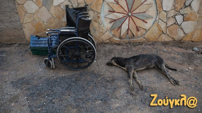 Βαρύς ο απολογισμός νεκρών ζώων στη διακεκαυμένη ζώνη