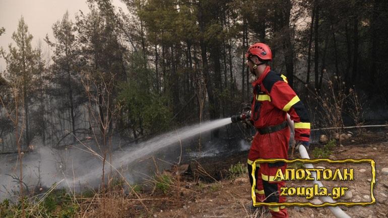 Αντιπυρικές ζώνες στην Αβγαριά Ευβοίας για την αντιμετώπιση των αναζωπυρώσεων