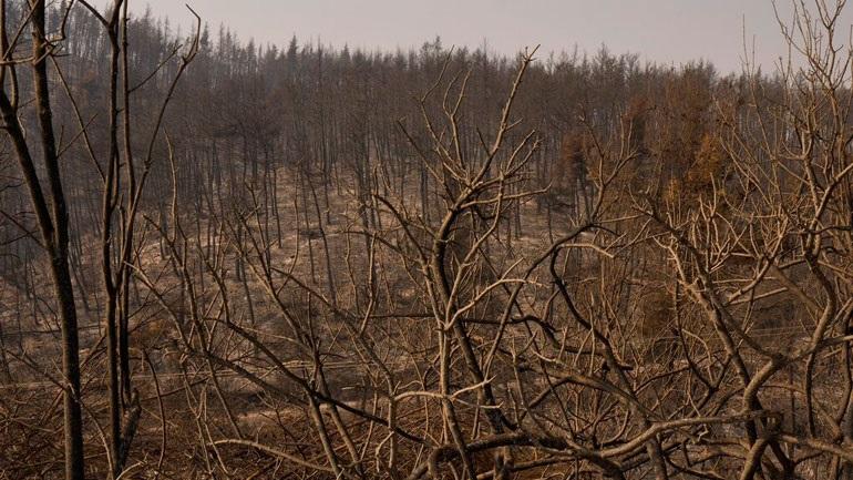Περίπου 50.000 στρέμματα κάηκαν στη Βόρεια Εύβοια μέσα σε τρεις ημέρες
