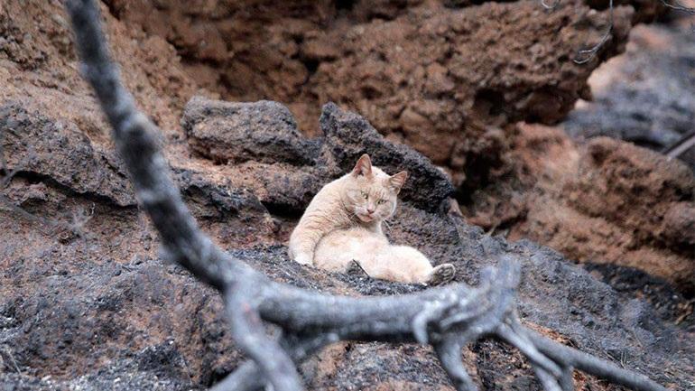 Ο Τσίτσος και οι φίλοι του συγκέντρωσαν και έστειλαν 5.754 ευρώ για τα πυρόπληκτα ζώα