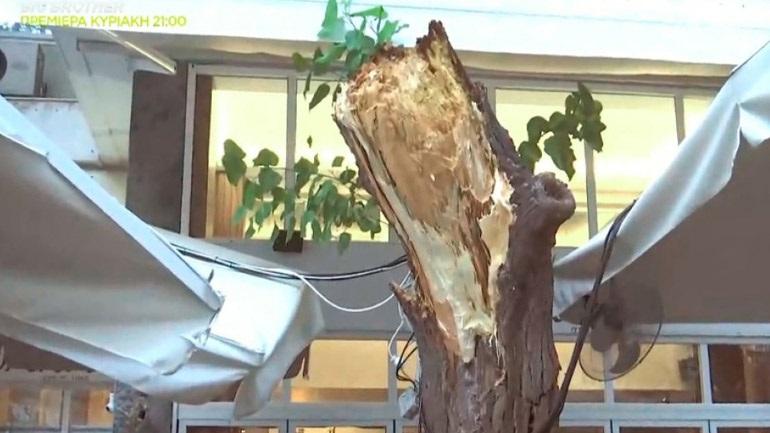 Κατέρρευσε δέντρο στο εστιατόριο που δειπνούσαν Πάιατ με Μενέντεζ
