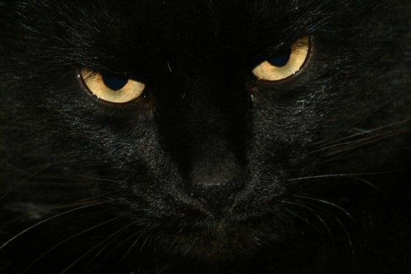 Μαύρο σκατά μαύρο com