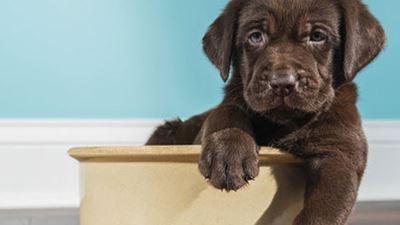 fae26c39498 Τι πρέπει να ξέρετε για την τροφή του σκύλου σας; | zougla.gr