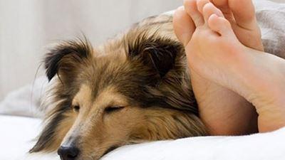 a9654eaf523f Πώς να μάθετε τον σκύλο σας να μην ανεβαίνει στο κρεβάτι σας