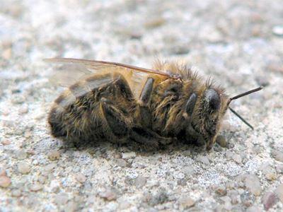 Ευρώπη: Αλυσιδωτές αντιδράσεις από την εξαφάνιση των μελισσών
