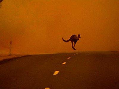 Ανησυχία επιστημόνων για την υψηλή θερμοκρασία στην Αυστραλία