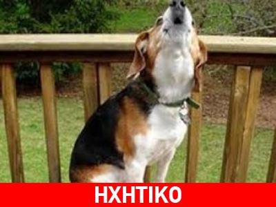 «Τα σκυλιά ούρλιαζαν με πρωτοφανή τρόπο 5 λεπτά πριν από τον σεισμό»