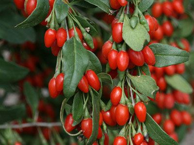 Χυμός από goji berries ή καλύτερα ένα μήλο;