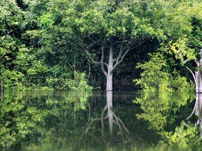 Εκτινάχθηκε η αποψίλωση του Αμαζονίου