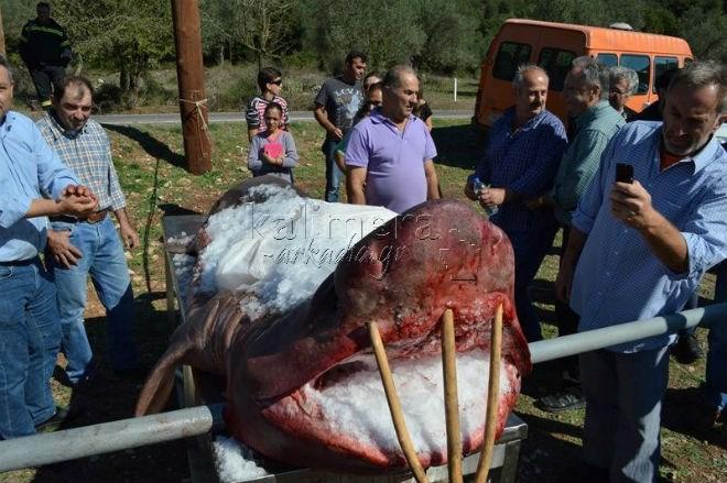 Γιγάντιος καρχαρίας εμφανίστηκε στη Λίμνη Λάδωνα!