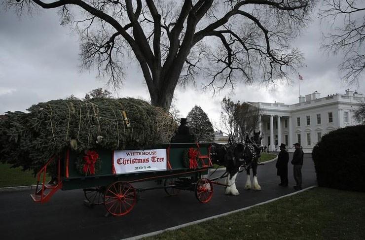 Άμαξα μετέφερε το χριστουγεννιάτικο δέντρο στον Λευκό Οίκο