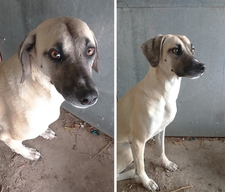υιοθεσία αδέσποτων αδέσποτα σκυλιά