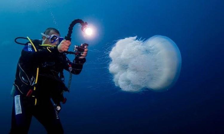 Μέδουσες - Ένας από τους «εισβολείς» στη Μεσόγειο